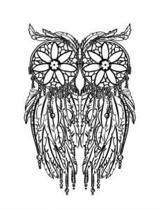 сова раскраска (445)