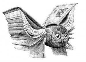 сова раскраска (449)