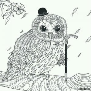 сова раскраска (45)