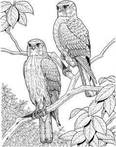 сова раскраска (453)