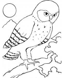 сова раскраска (466)