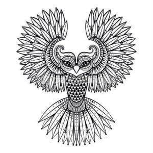 сова раскраска (469)