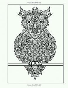 сова раскраска (473)