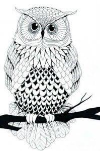 сова раскраска (475)