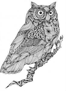 сова раскраска (476)