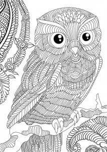 сова раскраска (485)