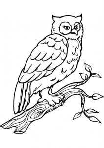 сова раскраска (491)