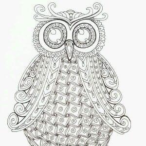 сова раскраска (498)