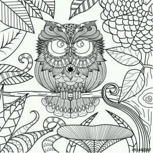 сова раскраска (499)
