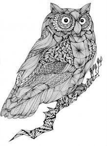 сова раскраска (501)