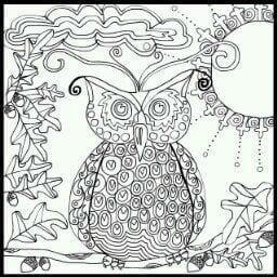сова раскраска (504)