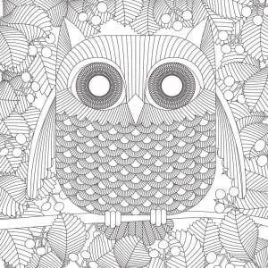 сова раскраска (507)