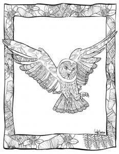 сова раскраска (508)