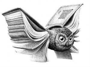 сова раскраска (512)