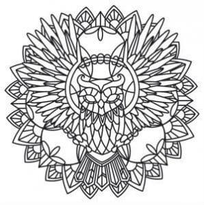 сова раскраска (516)