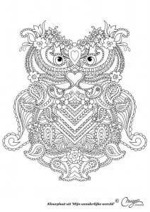 сова раскраска (525)