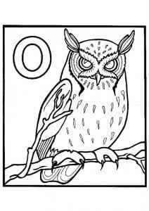 сова раскраска (530)