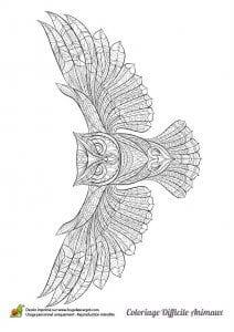 сова раскраска (533)