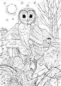 сова раскраска (534)