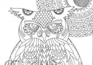 сова раскраска (535)