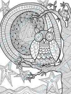 сова раскраска (539)