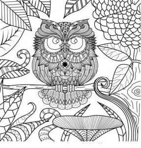 сова раскраска (545)