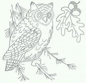 сова раскраска (564)