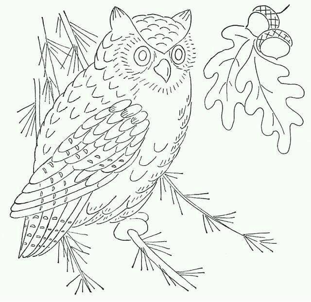 Картинка раскраска сова на дереве