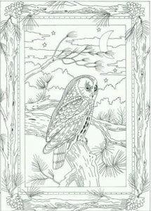 сова раскраска (565)