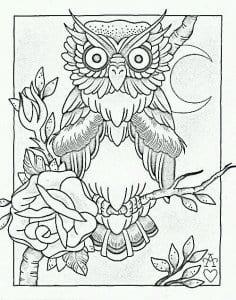 сова раскраска (566)
