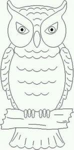сова раскраска (571)