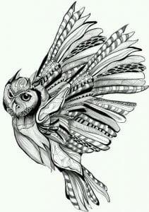 сова раскраска (584)