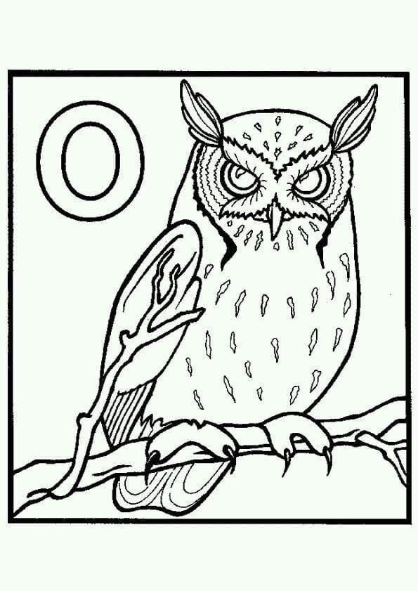 сова раскраска (589)