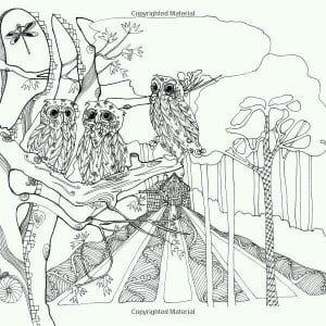 сова раскраска (590)