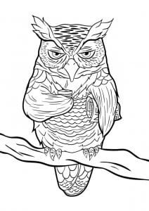 сова раскраска (592)