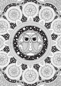 сова раскраска (593)