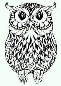 сова раскраска (598)