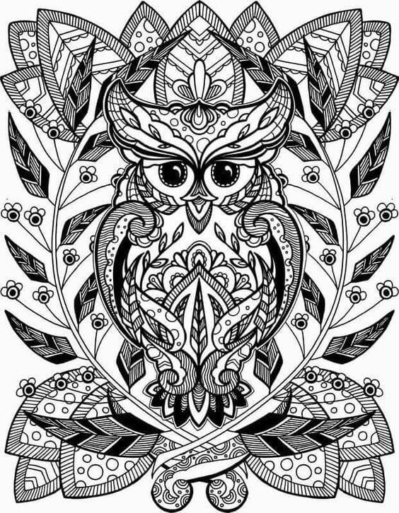 сова раскраска (602) - Рисовака