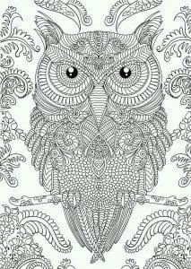 сова раскраска (603)