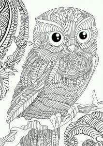 сова раскраска (604)
