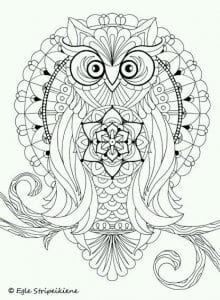 сова раскраска (605)