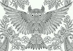 сова раскраска (606)