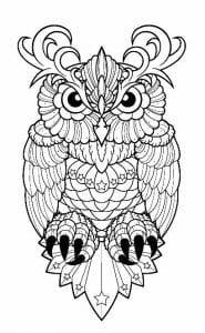 сова раскраска (609)