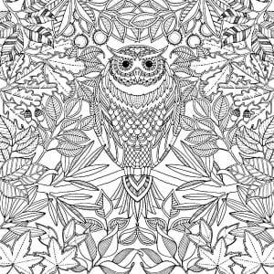 сова раскраска (72)
