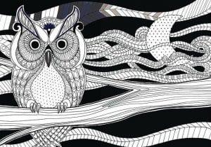 сова раскраска (73)