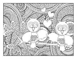 сова раскраска (82)