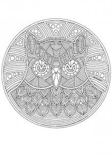 сова раскраска (85)