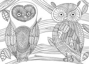 сова раскраска (86)