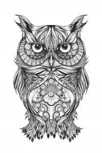 сова раскраска (87)