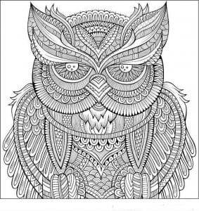 сова раскраска (88)